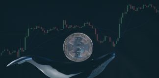 bitcoin price whale
