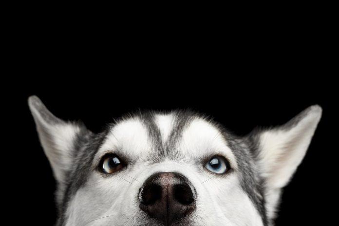 dogecoin dog