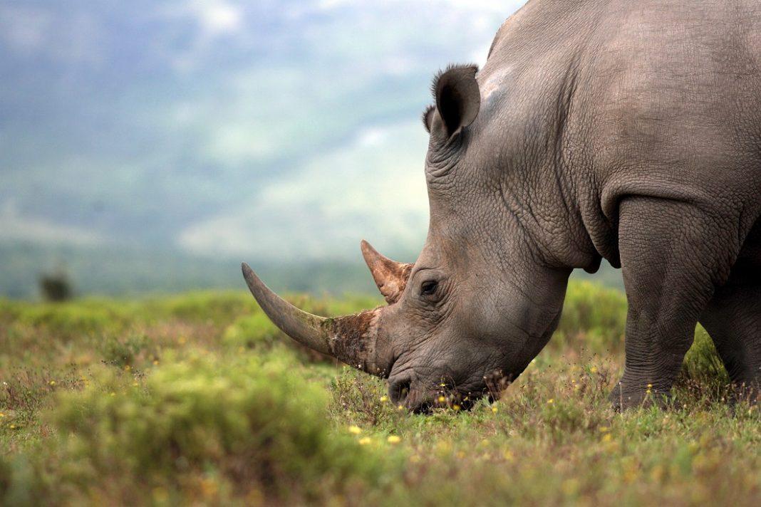 poaching animals
