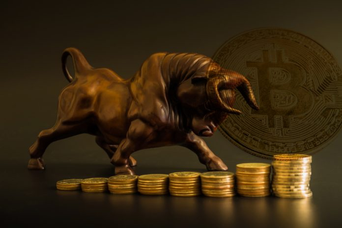 NullTX Bitcoin Cash price Bullish