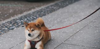 dogecoin price down