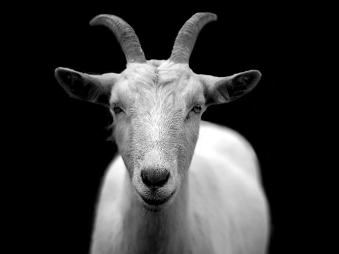 NullTX Goat Science