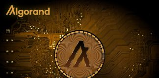 NullTX Algorand Developments